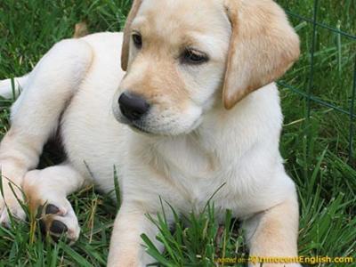 La TAAC...(Terapia asistida con animales de compañia)